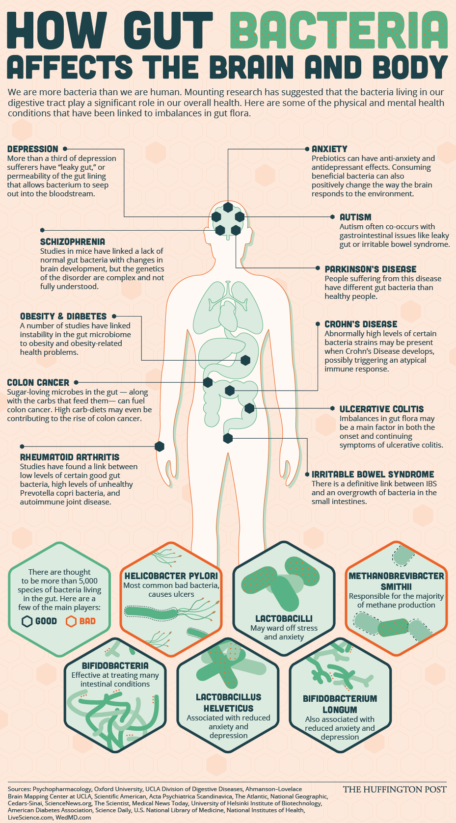 What the bacteria in your gut have to do with your physical and what the bacteria in your gut have to do with your physical and mental health ccuart Images