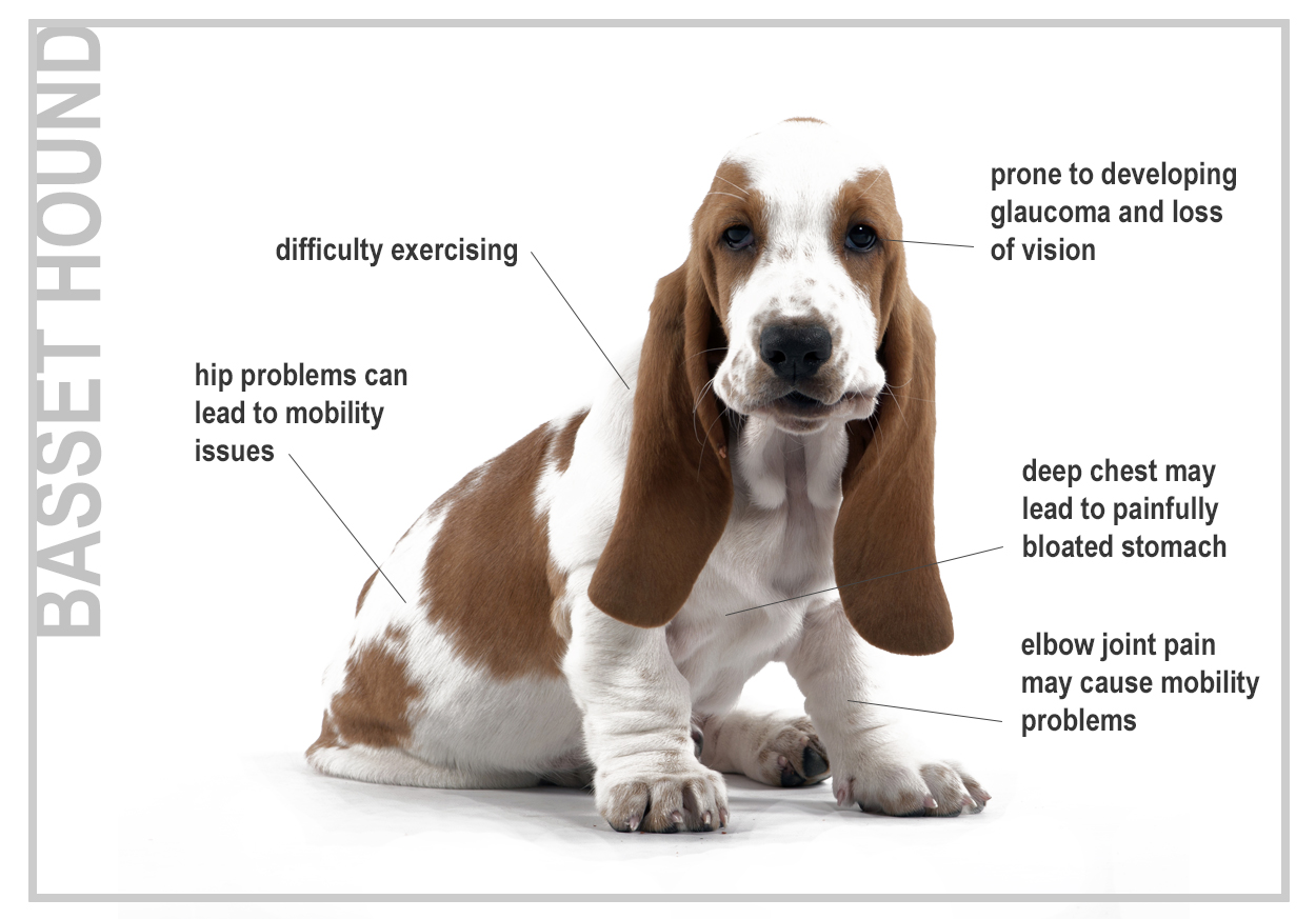 Problems With Selective Breeding In Dogs
