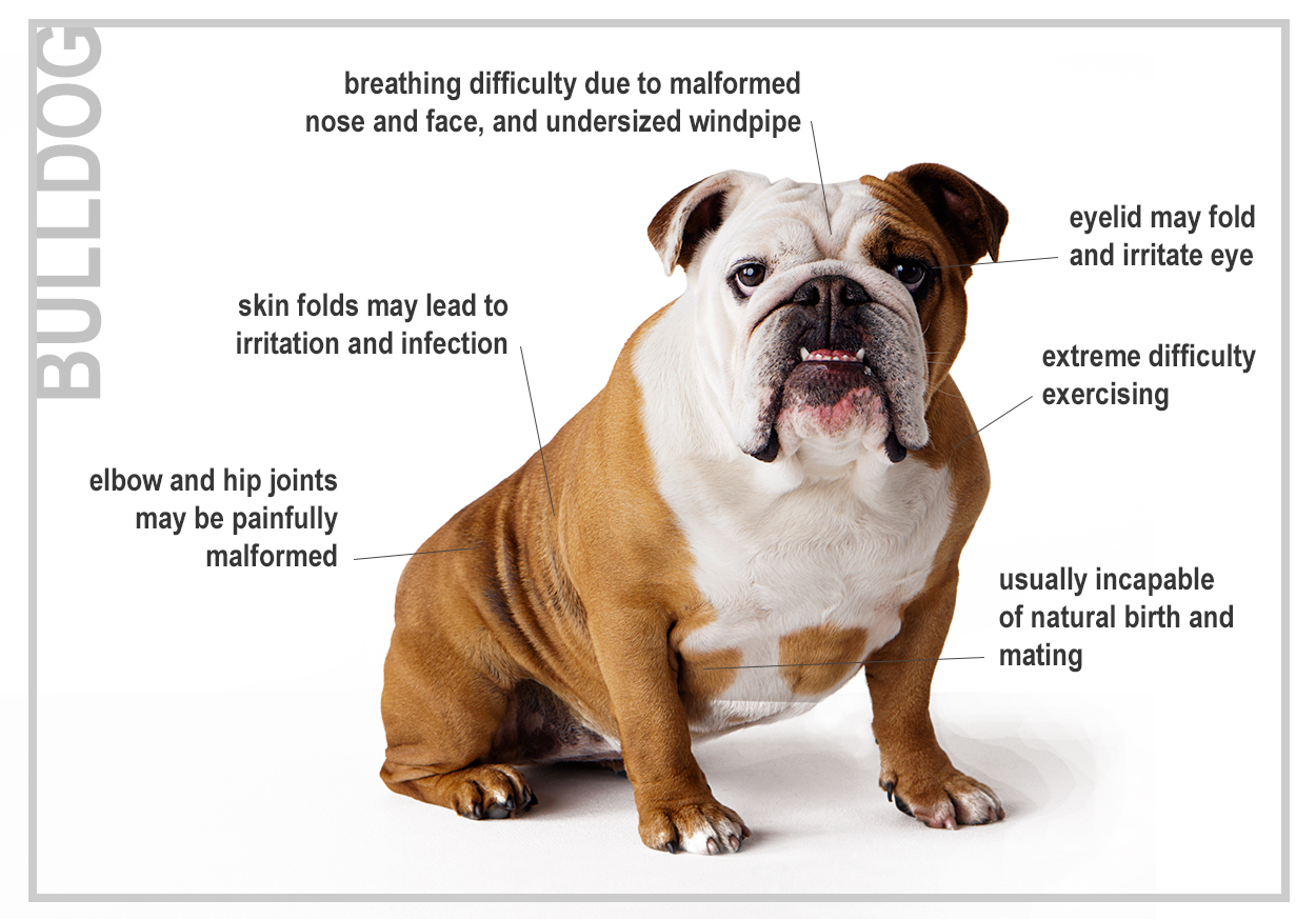 Breed Related Diseases In Dogs