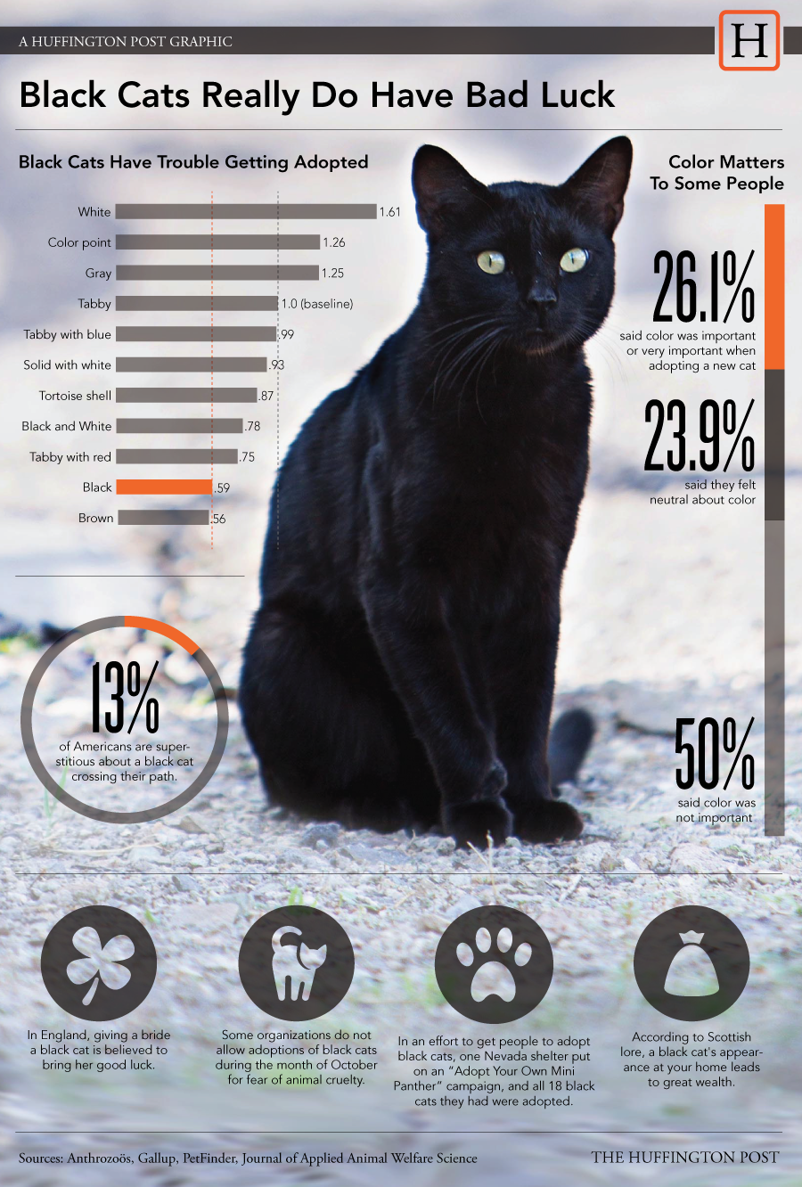 Black Cats Less Than Half As Likely To Be Adopted As Gray Cats