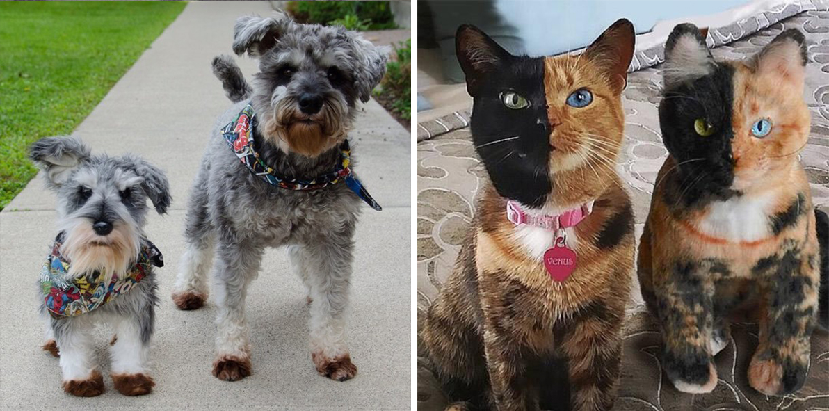 Now You Can Clone Your Pet As A Stuffed Animal, If You're Into That