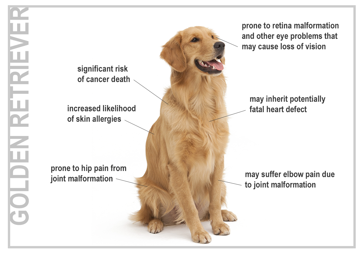Best Dog Food For Skin Issues