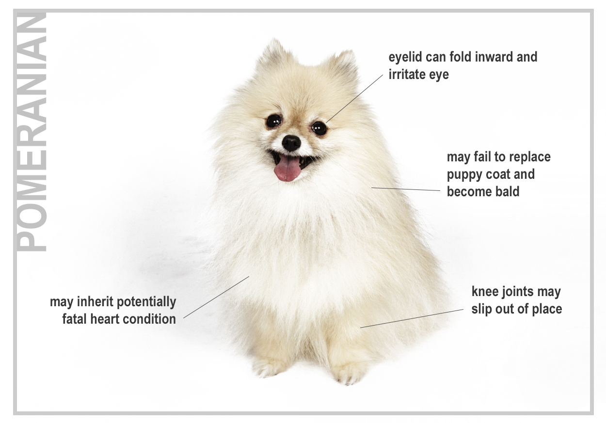 Line Breeding Dogs Risks