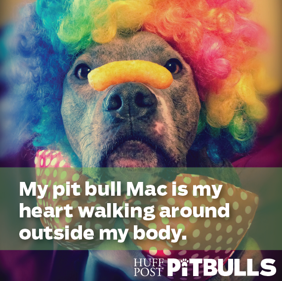 Big Pit Bulls - Motorcycle Review and Gallery