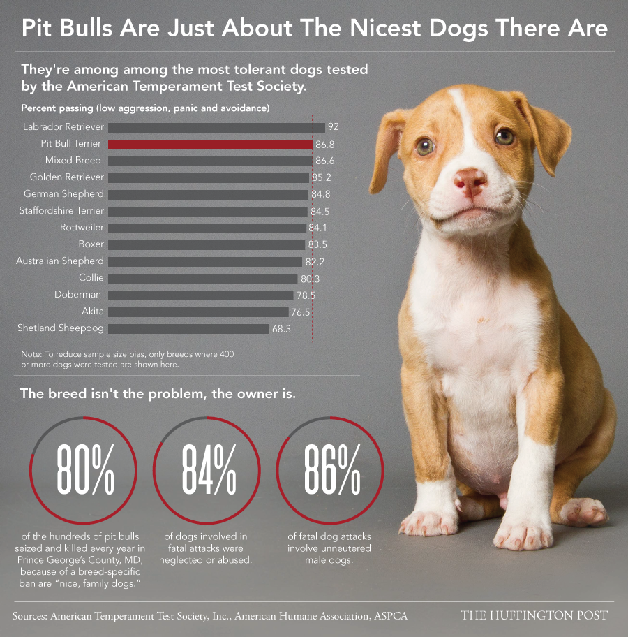 Pitbull Dog Quotes Why It's Ridiculous People Still Think Pit Bulls Are Inherently