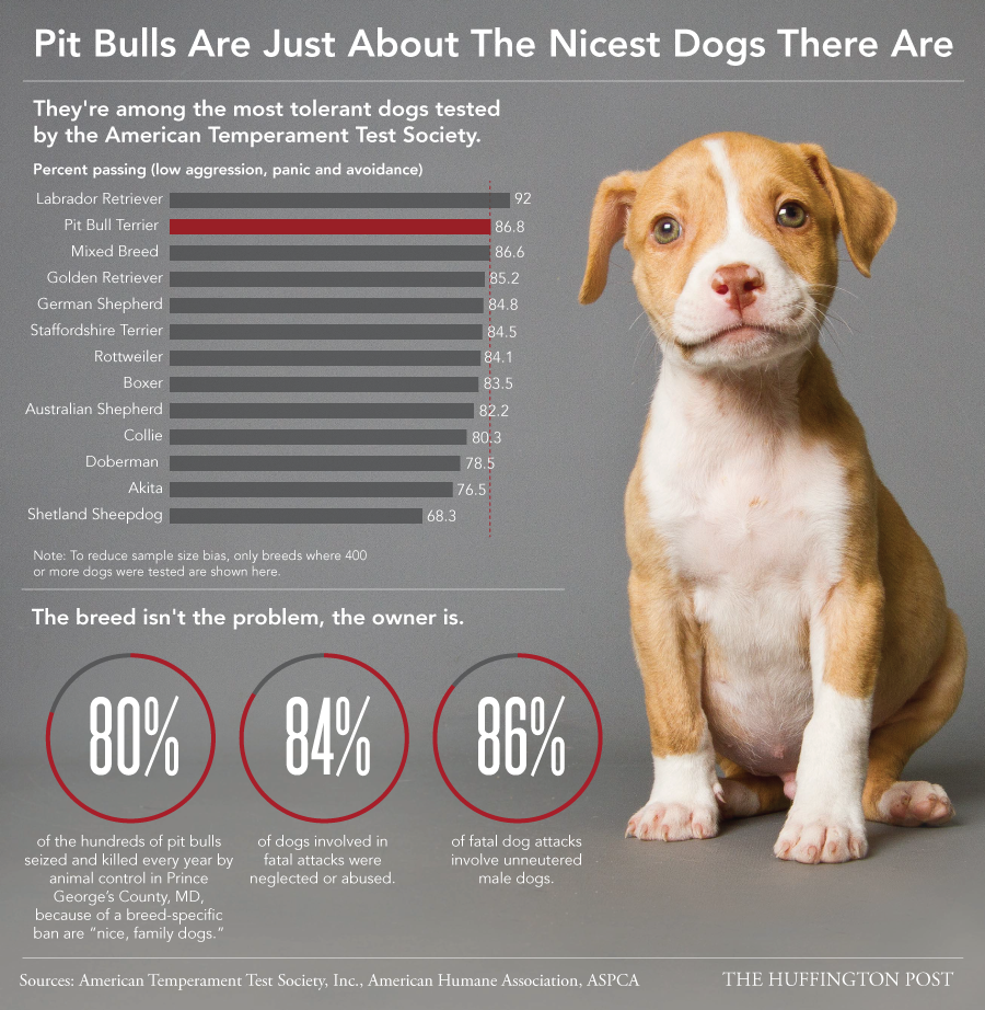 Why It's Ridiculous People Still Think Pit Bulls Are