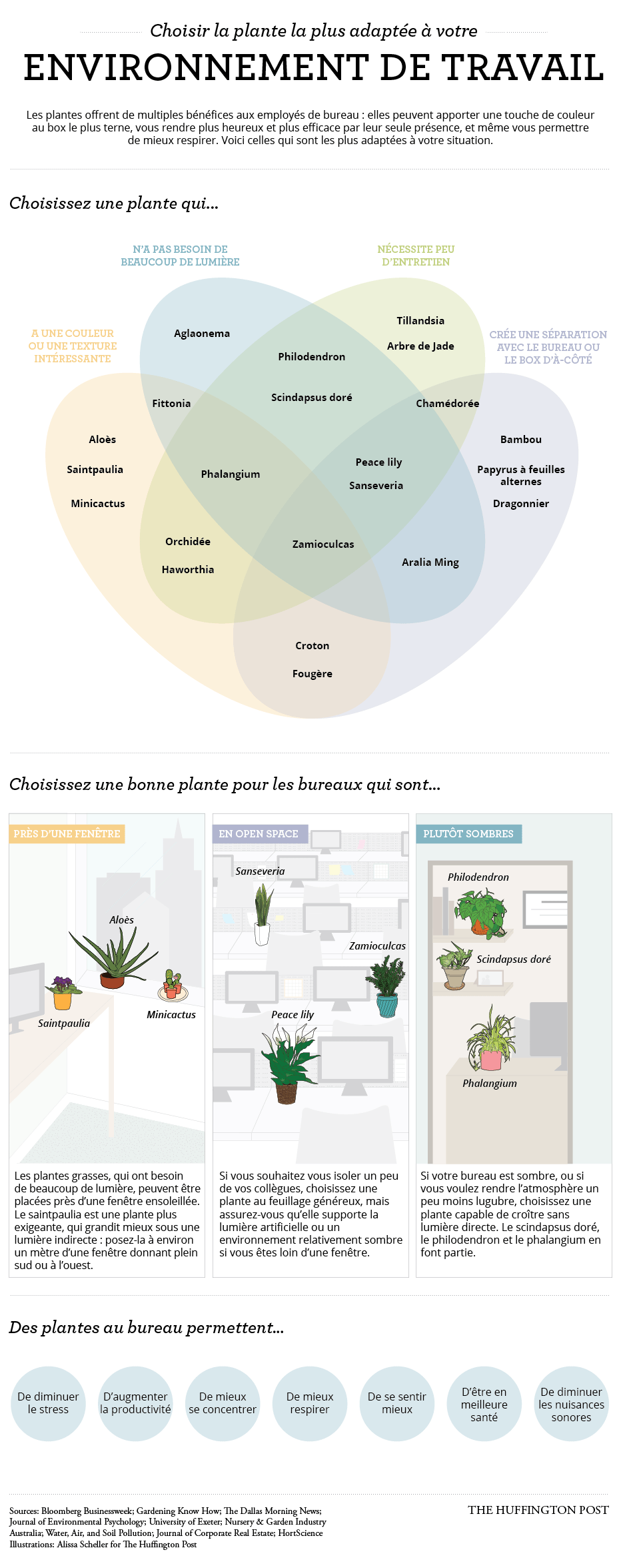Bien choisir une plante de bureau pour faire grimper en flèche sa