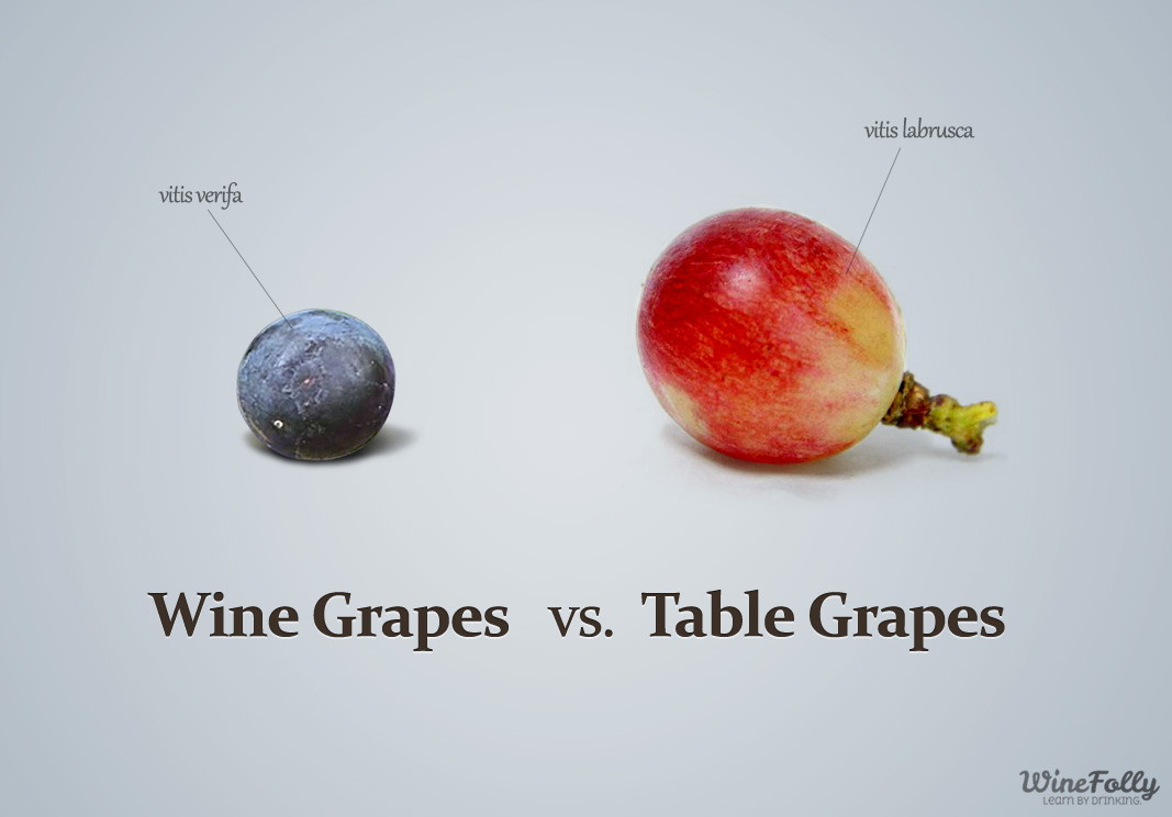 14 charts that 39 ll help you look like a bona fide wine expert huffpost - How to build a grape vine support the natural roof ...
