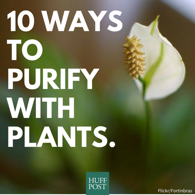 10 best houseplants to de stress your home and purify the for Hearty low maintenance plants