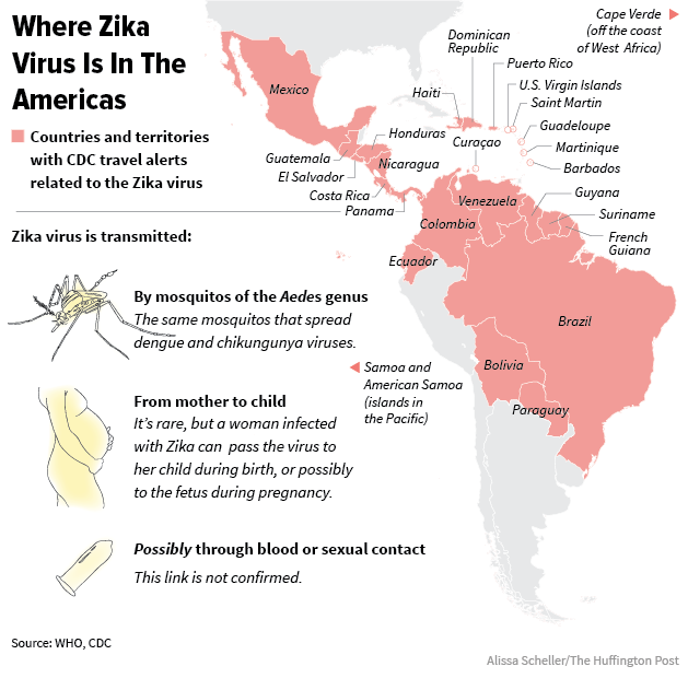 Zika Virus Symptoms Facts And Affected Countries: What Pregnant Women Should Know About Zika Virus
