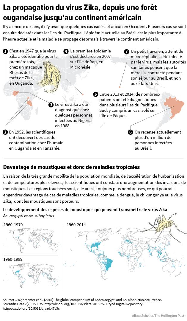 risques propagation localisation tout ce qu 39 il faut savoir sur le virus zika. Black Bedroom Furniture Sets. Home Design Ideas